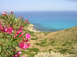 Oleandri_Sardegna_Sardinia