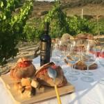 Degustation de vin chez La Cantina Sorres