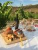 CANTINA SORRES: wine tour