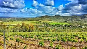 wine-tour-cagliari